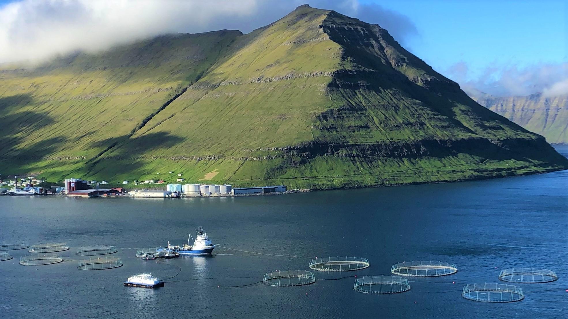 Bakkafrosts fisk-burar utplacerade i fjorden.